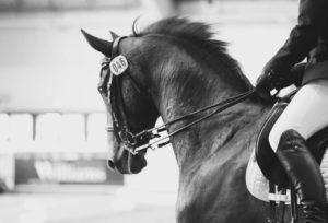 Dressage Petplan Festival @ Aintree International Equestrian Centre | England | United Kingdom