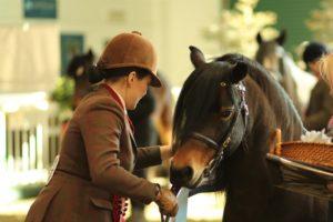 The Showing Register Training Clinic @ Aintree International Equestrian Centre | England | United Kingdom
